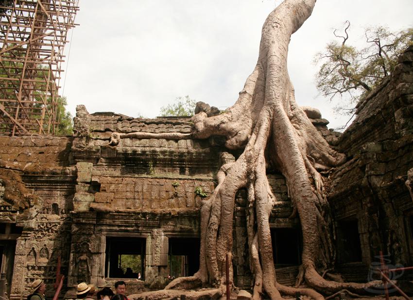 Камбоджа, Ангкор, Та Пром, 2013
